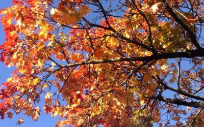Yoga: programme de l'automne