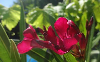 Estival: yoga et massages aux jardins